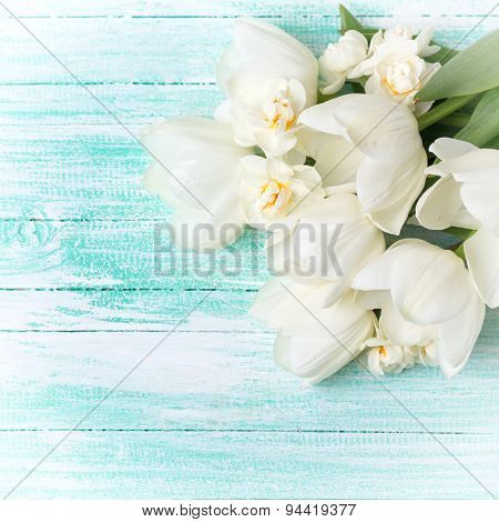 Background With  White Tulips And Narcissus