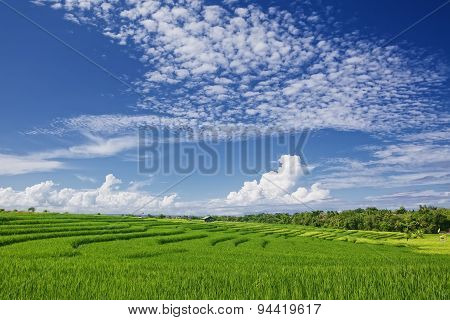 Beautiful Green Paddy Terraces Under Bright Blue Sky With Clowds