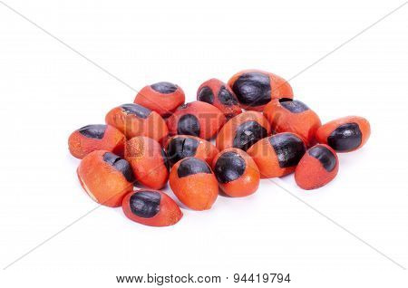 Bright Red And Black Seeds Of The Natal Mahogany Tree
