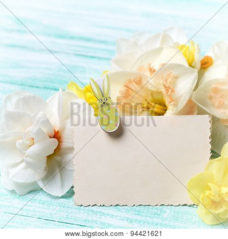 Tender Narcissus Flowers And Empty Tag
