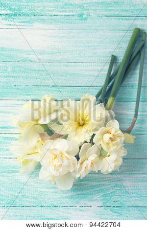 Fresh Tender Daffodils Flowers