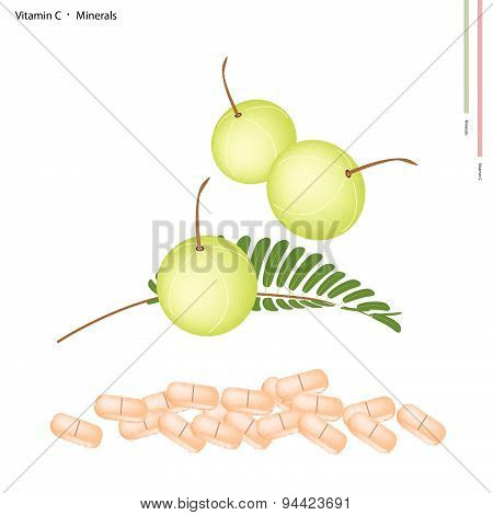 Fresh Indian Gooseberry With Vitamin C And Minerals
