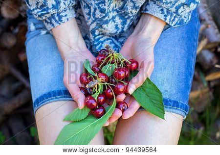 Female Hands Holding Cherries
