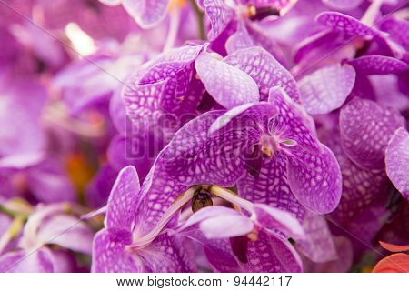gardening, botany, texture and flora concept - beautiful orchid flowers