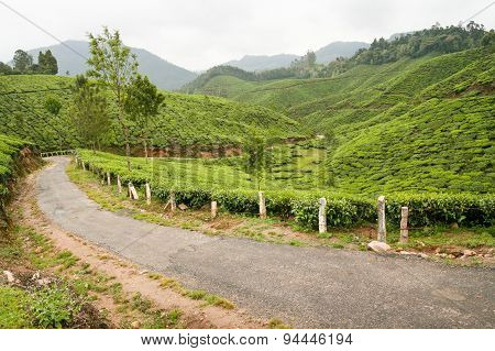 Tea plantations munnar india