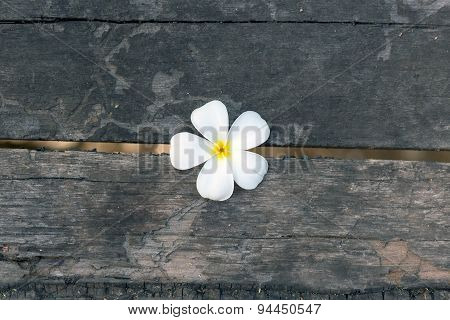 Plumeria With Wood Background