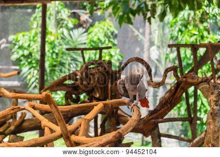 African Grey Parrot Perched On Branch