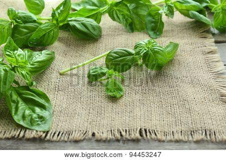 Green fresh basil on sackcloth background