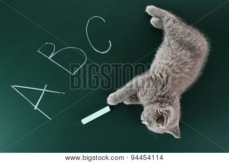 Cute gray kitten on green chalkboard background