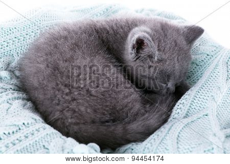 Cute gray kitten on plaid, closeup
