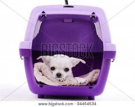Adorable chihuahua dog in travel plastic cage isolated on white