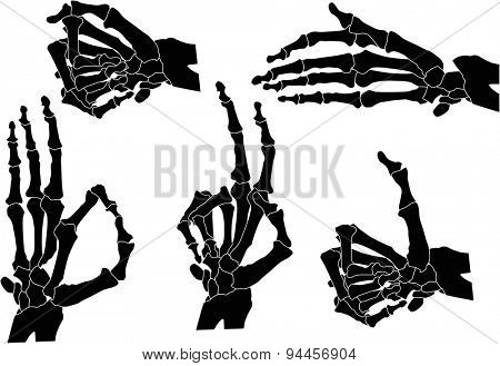 illustration with human hands skeleton isolated on white background