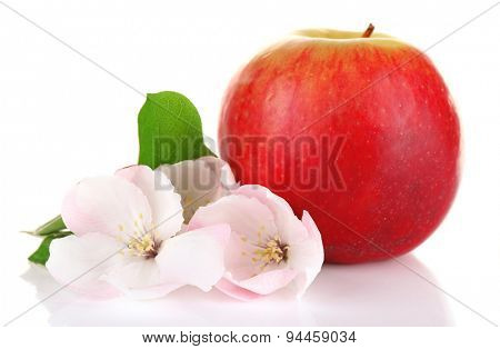 Fresh apple with apple blossom, isolated on white