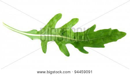 Green arugula leaf isolated on white