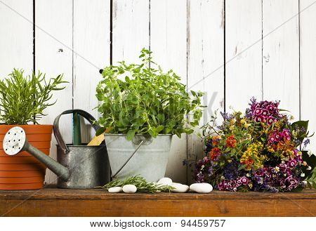 still-life with potted rosemary and oregano, watering can, dried flowers, rustic background