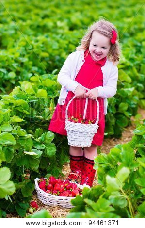 Little Girl Picking Strawberry On A Farm Field