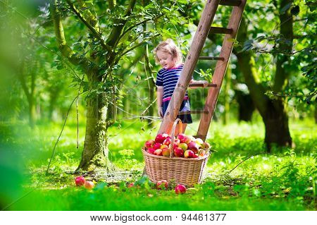 Little Girl Picking Apples On A Farm