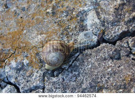 Lone Snail Crawling On Old Cracked Concrete