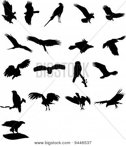 Birds of prey - Silhouettes