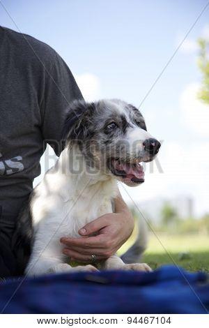 Dog n the Park