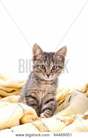 Small Gray Kitten Look At Camera On A Soft Yellow Blanket
