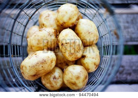 Fresh uncooked potatoes in wire basket