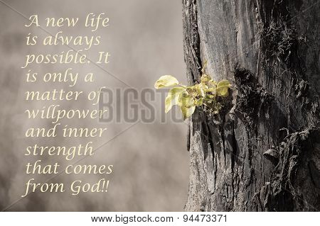 New Green Leaves Growing From Old Tree Trunk With Message