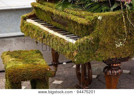 Green moss piano