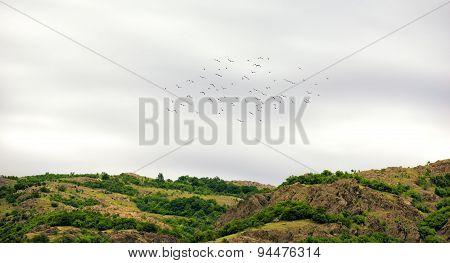 Flock Of Birds In Springtime