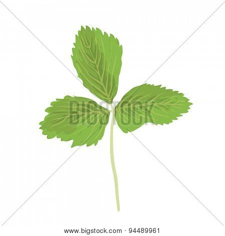 Green strawberry leaf isolated on white background, vector illustration
