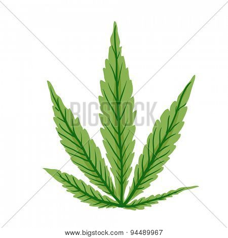 Cannabis leaf, isolated on white background,  vector illustration