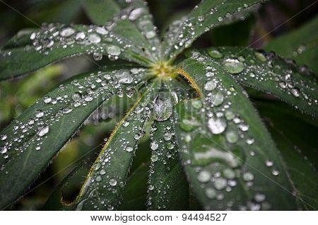 Rain water on leaves