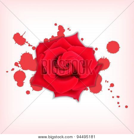 Red rose with splashes