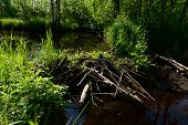 pic of dam  - Forest river blocked by beaver dams forming shoal - JPG