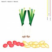 foto of leek  - Healthcare Concept Illustration of Fresh Leek with Vitamin K Vitamin A and Minerals Tablet Essential Nutrient for Life - JPG