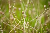 foto of dry grass  - Nature background - JPG