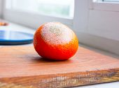 stock photo of rotten  - Orange fruit rotten on a colored background - JPG