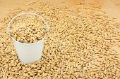image of bucket  - White bucket with barley on the wooden floor as a background - JPG