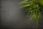 picture of chive  - Chives plant on slate background - JPG