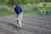 image of hoe  - Farmer weeding his garden with a hoe - JPG