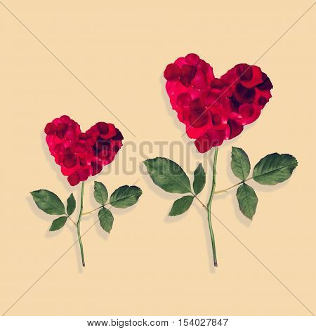 two rose heart heart rose on a stem with leaves isolated on white background