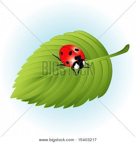 Ladybird on leaf. Vector.