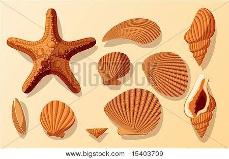 Shells. Vector.