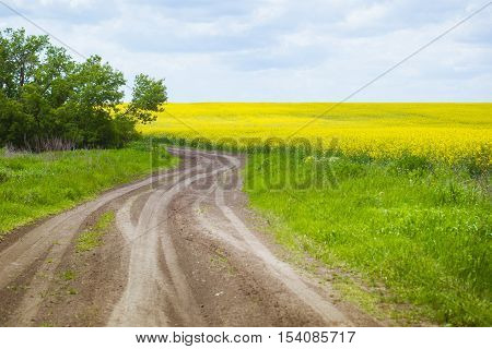 Spring. Spring landscape. Spring. Yellow field of blooming canola and blue sky with clouds . The road stretches into the distance. Way. Road turn. Green tree on the horizon