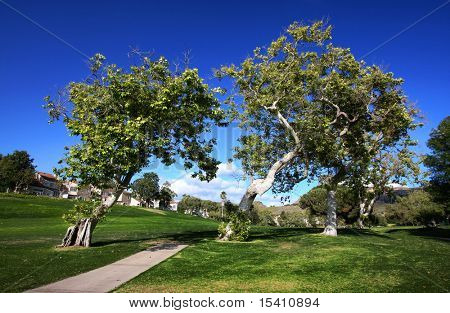 Leaning Trees On Golf Course With Houses In Background