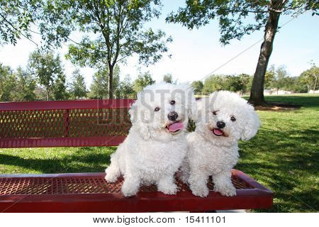 Happy Dogs Posing On Park Bench