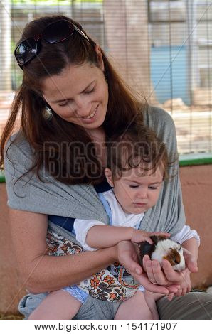 Mother And Baby Petting Guinea Pig Cub