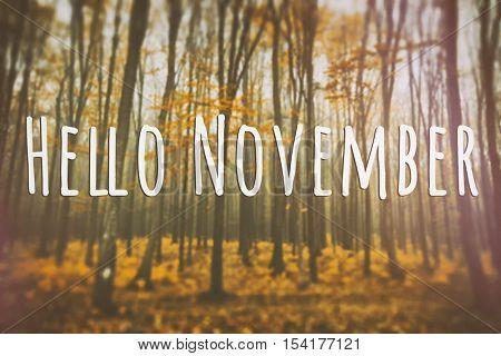 Autumn card with words: Hello November