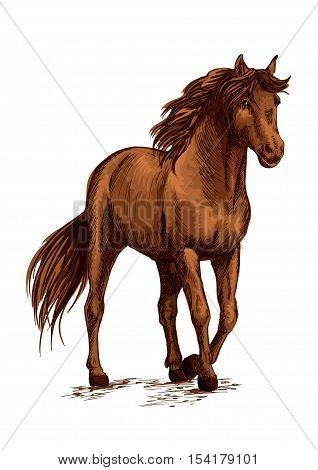 Brown horse pacing calm in wild. Beautiful bay mare with glossy shining horse hair and waving mane. Modest stallion bending front hoof. Vector color sketch portrait