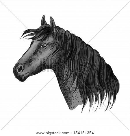Horse head portrait. Humble black mustang with kind eyes. Raven mustang stallion sketch